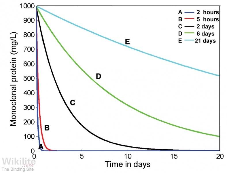 Clearance and Metabolism of FLCs and Immunoglobulins | Wikilite