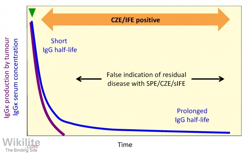 Figure 18.15. Theoretical patient with persistence of low-level monoclonal IgG due to FcRn receptor recycling.