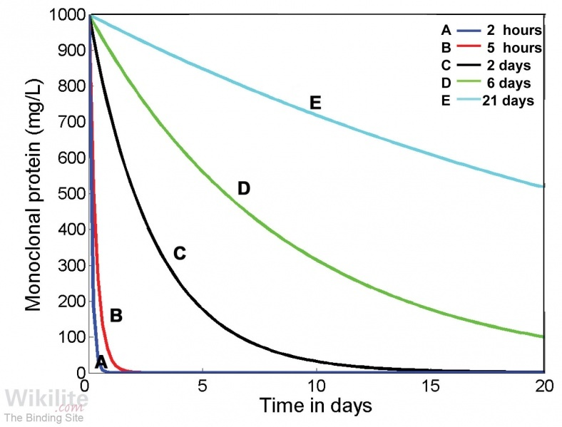 Figure 3.10. Calculated serum half-life curves for different immunoglobulin molecules.