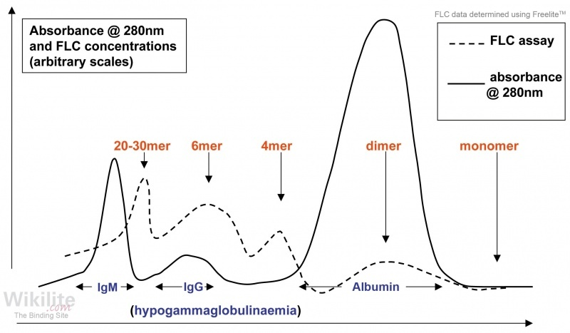 ​Figure 16.3. Size-separation gel chromatography showing the FLC size variation in a serum sample from a patient with NSMM.