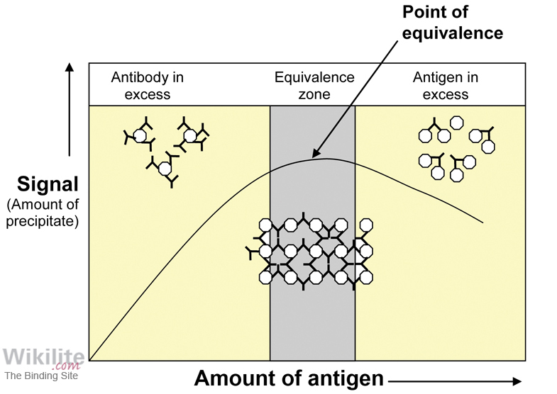 Figure 7.5. Diagram illustrating the mechanism of antigen excess.